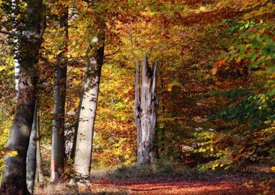 Herbstwald 2