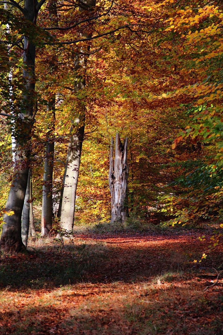 Herbstwald 2, Digitalfotografie als HD Metal Print in verschiedenen Grössen
