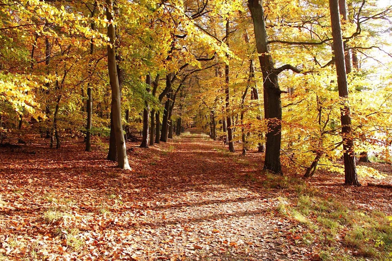Herbstwaldweg, Digitalfotografie als HD Metal Print in verschiedenen Grössen