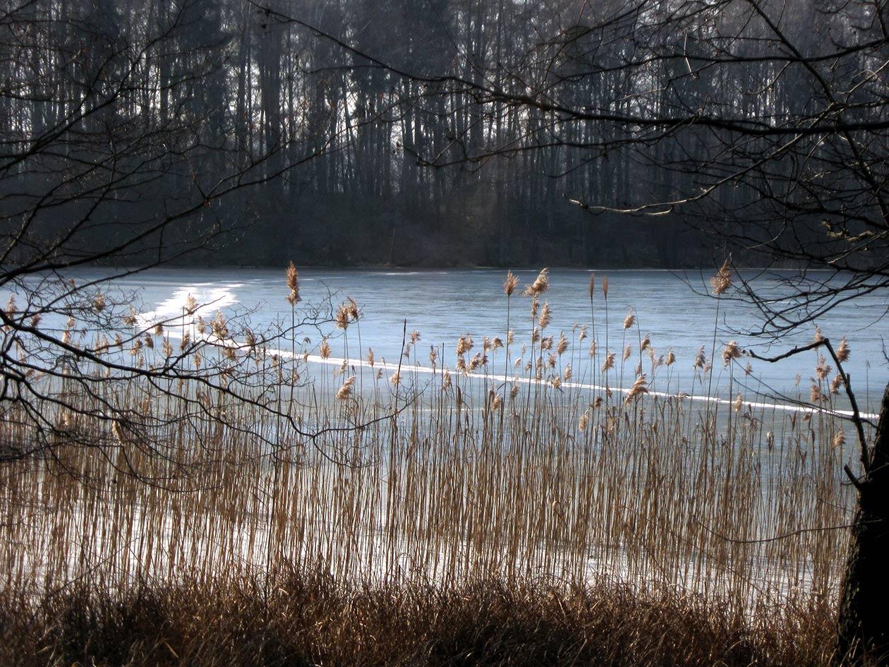 Eisblauer Waldsee, Digitalfotografie als HD Metal Print in verschiedenen Grössen