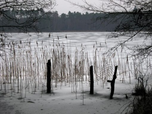 Winterstimmung am Dovinsee