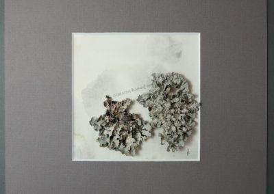 """Think Twice"", Draufsicht, von Sandra Egert, Close-up-Serie, Wandobjekt auf Aquarell, L 10 x B 10 cm , H 2 cm, grau passepartouriert B 20 x L 20 cm"